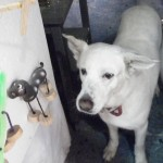 Taller_Tlamaxcalli_dogs