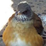 polanco_aviary_mexicocitystreets4
