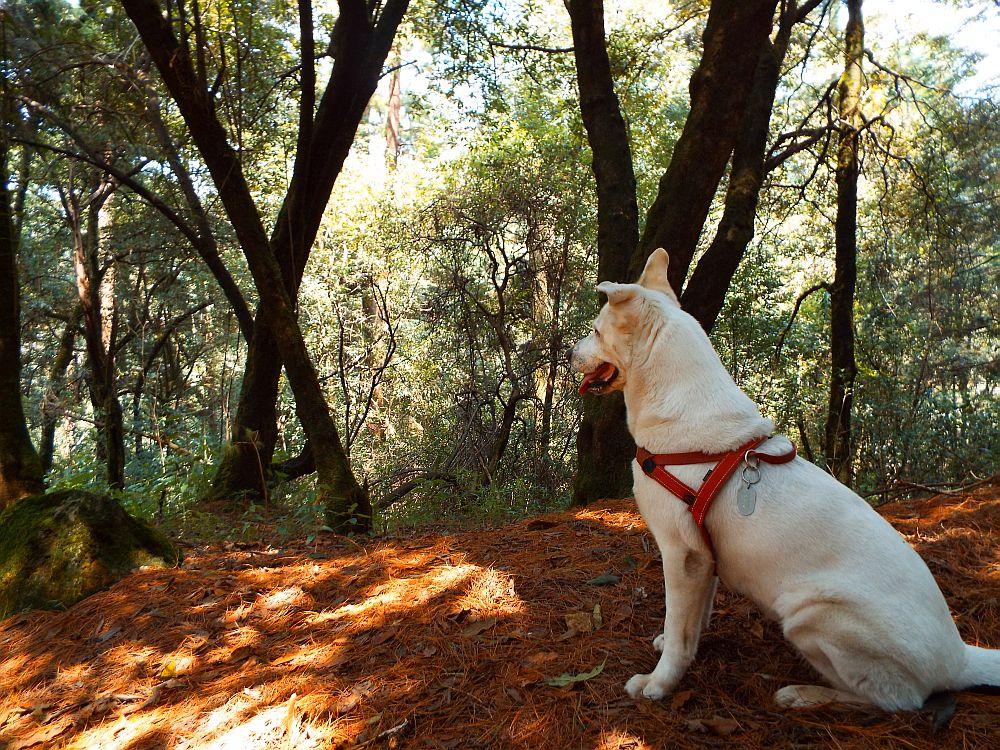 dog_disierto_de_los_leones